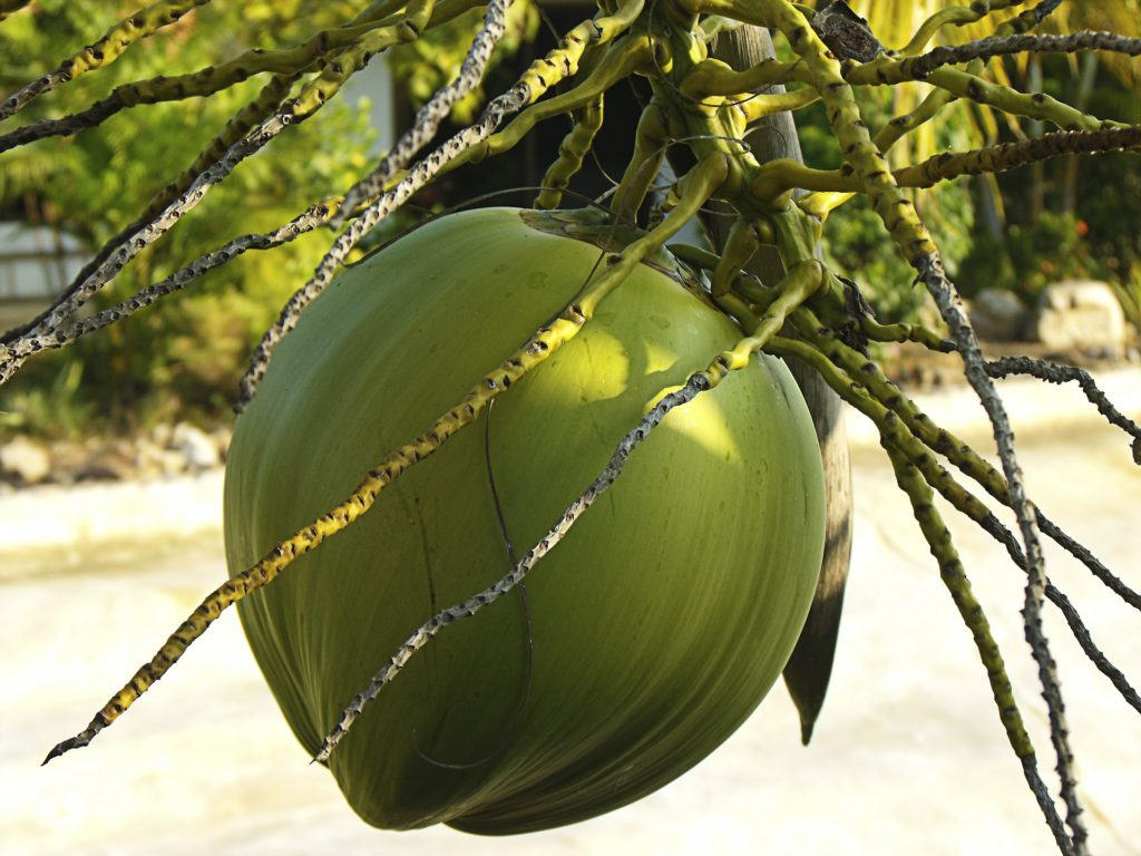 Woda kokosowa. Właściwości i zastosowania